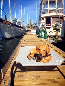 Bailey - #2 BMI pup